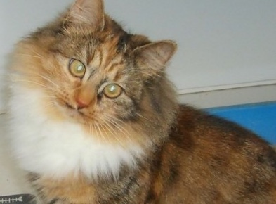 Could you help needy cats in Harlow?
