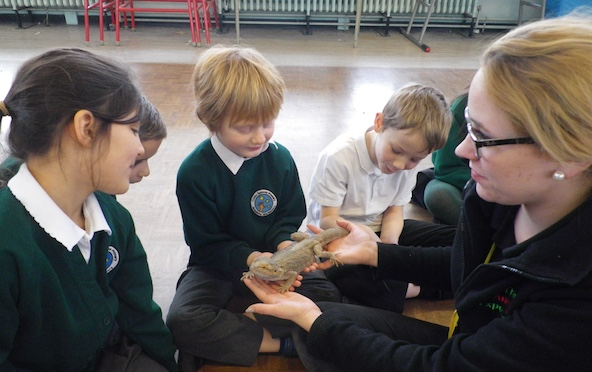 Snakes and lizards at Cooks Spinney