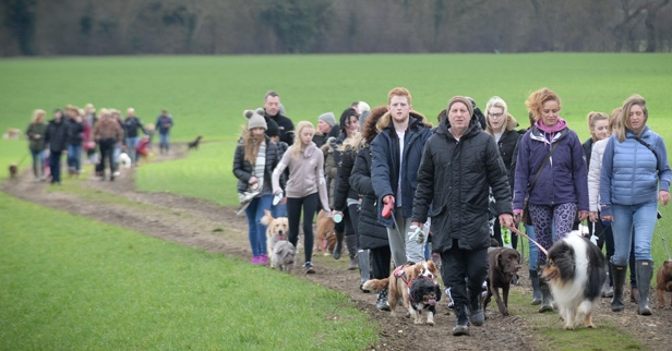 Puppy love in air for St Clare's Winter Walkers