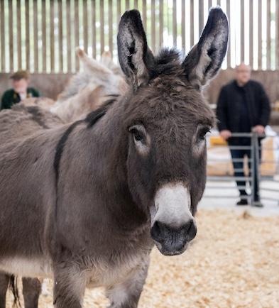 Donkey 2