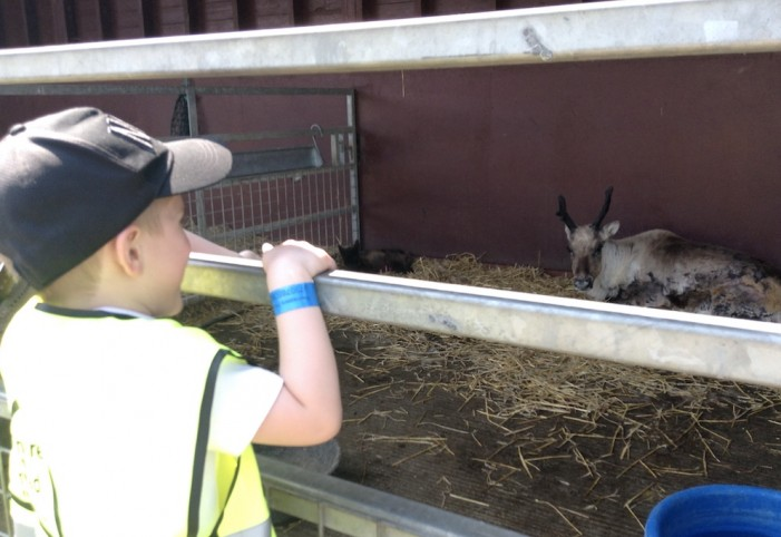 Reception pupils visit Pets' Corner