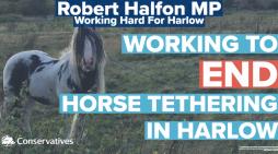 Robert Halfon MP calls for major legal reform to end horse tethering