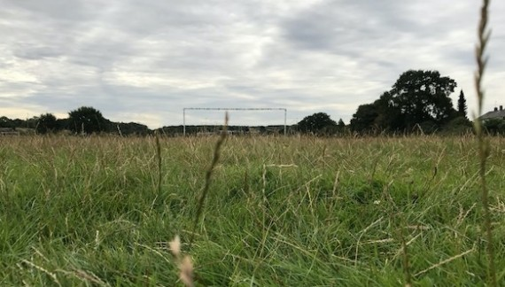 Has football been kicked into the long grass at Nicholls Field?