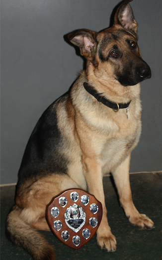 Sad farewell to Rox the Harlow Council Community Safety Team dog