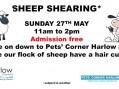 Sheep Shearing at Pets' Corner