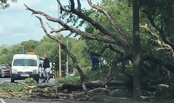 Travel Alert: Fallen trees cause obstruction on Howard Way