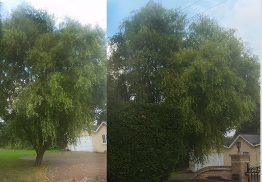 Two prosecuted for cutting down protected tree