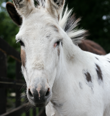 Redwings: Give the gift of friendship to rescued horses