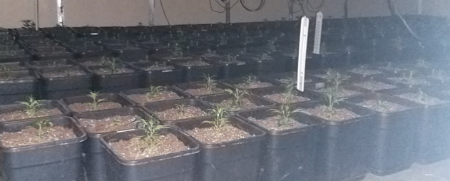 Police unearth cannabis factory in Harlow industrial estate
