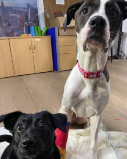 RSPCA continue to re-home rescue animals