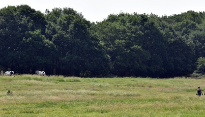 Call for support to tackle climate change in rural Essex