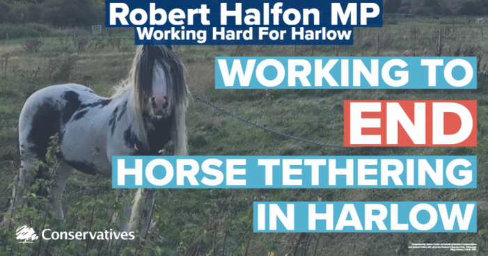 Robert Halfon MP calls for major legal reform to end horse tethering