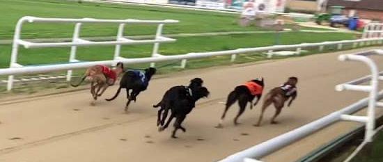Company based at Harlow Greyhound Stadium goes into administration