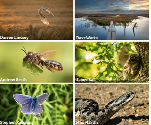 Harlow photographers invited to enter wildlife competition