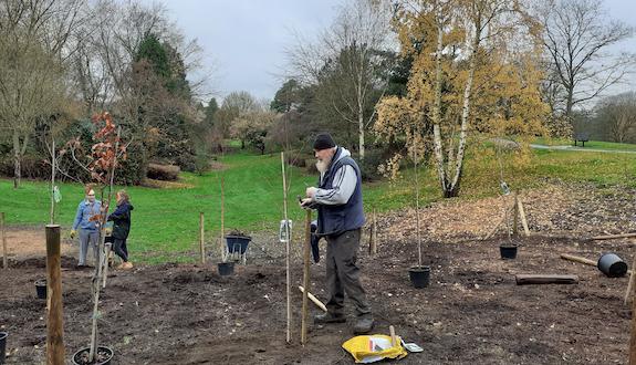 Harlow marks national tree week
