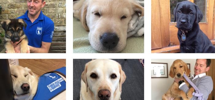 London Marathon 2020: Harlow teacher raising money for Guide Dogs