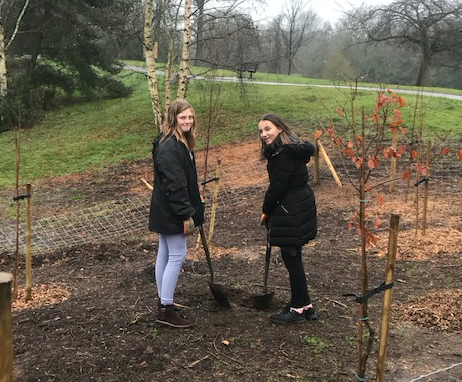 Burnt Mill Academy students help plant trees