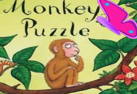 Cooks Spinney story of the day is Monkey Puzzle