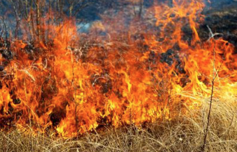 Wildfire advice for Harlow as Met Office issues amber warning