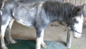 RSPCA fears recession will bring 'horse welfare catastrophe'